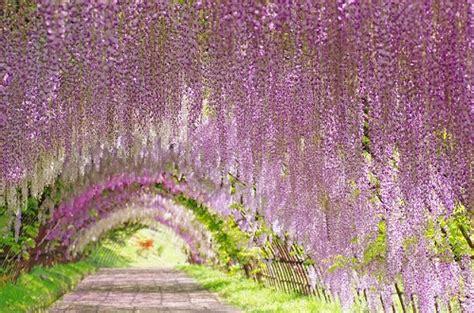 flower tunnel แล วค ณจะหลงร กซ มเมอร ก บ 10 ท เท ยวส ดประท บใจ