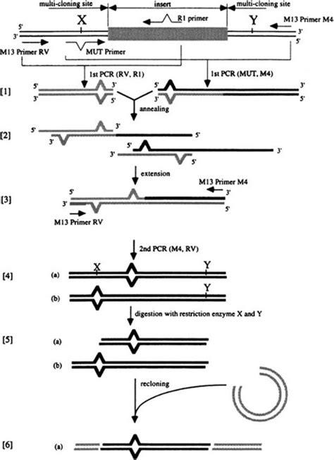 PCR-Based Site-Directed Mutagenesis | SpringerLink