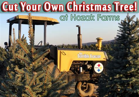 cut your own christmas tree at hozak farms pics video