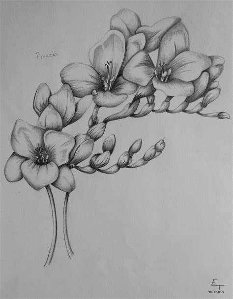 freesia tattoo designs freesia flower drawing august 19 2013 flowers