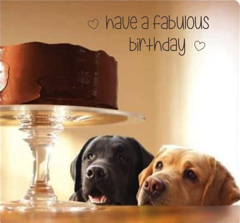 Birthday Cake Dog Meme - 25 best ideas about happy birthday dog on pinterest