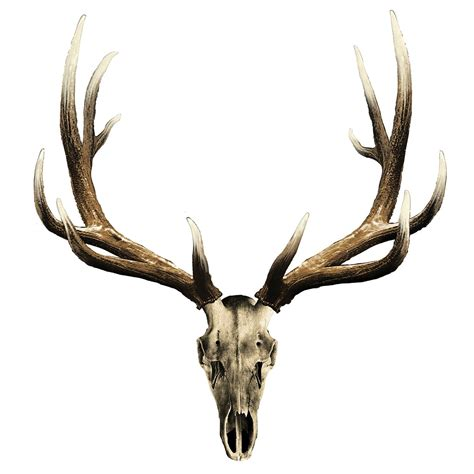 elk antler tattoo designs bull elk skull more images elk skull vesting plans