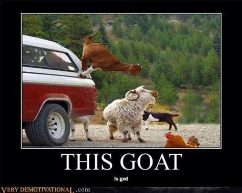 Funny Goat Memes - goat memes goat memes goat float flickr