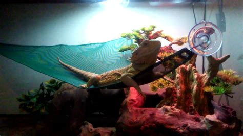 Snake Hammock by Zoo Med Reptile Hammock Review