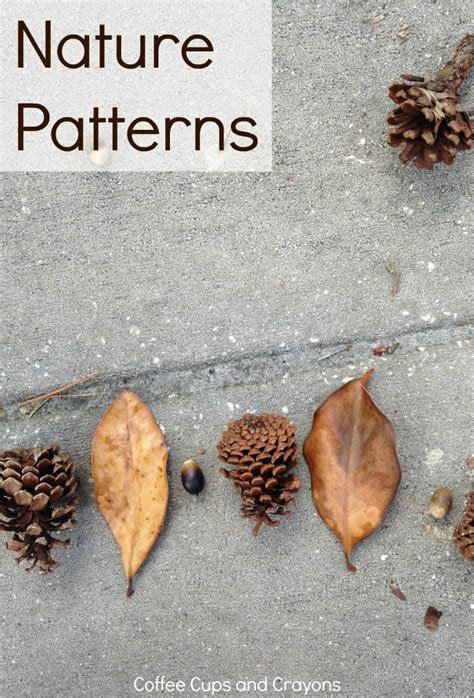 patterns in nature experiments 61996 best math for first grade images on pinterest