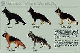 german shepherd color chart i want a saddle back german shepherd gotta dogs