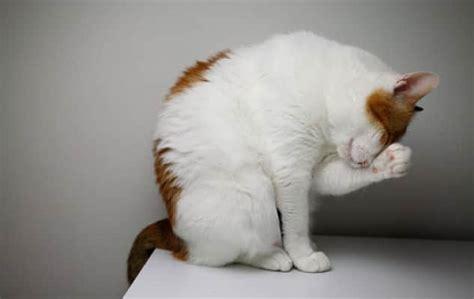 imagenes de gatitos llorando fotos de gatos llorando