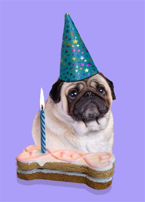 pug birthday pug birthday card pugs