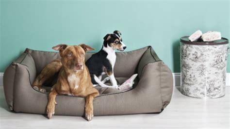 cuscini per cani taglia grande dalani divano per cani di taglia grande relax per fido