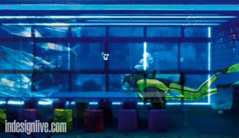 aquarium design sydney google s sydney office