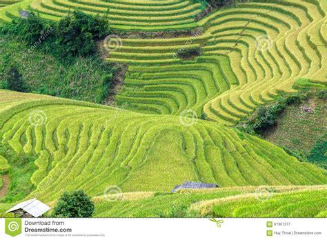 terrazzamenti in collina terrazzamento glutinoso abbassa il pendio di collina