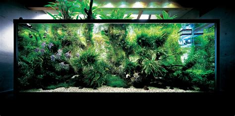 Amano Aquascape by Nature Aquariums And Aquascaping Inspiration