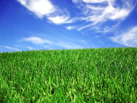4 simple steps to the green lawn