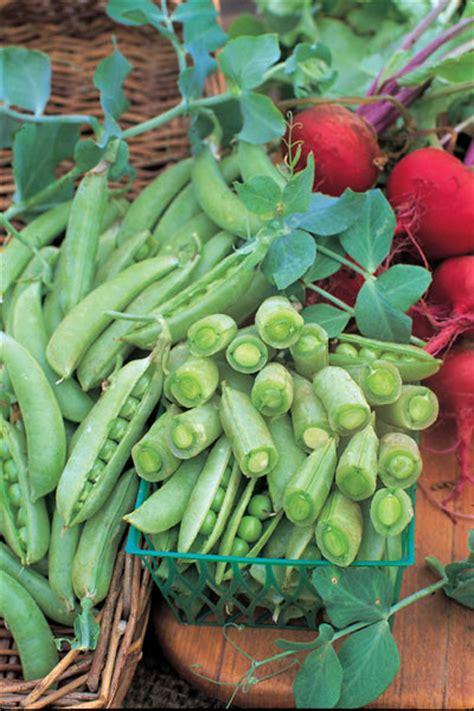 Pea Delivery Buy Pea Sugarsnap Pisum Sativum Sugar Snap Pea