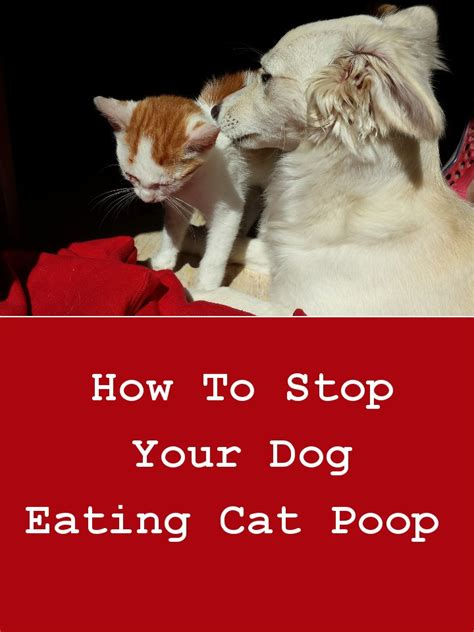 how to prevent dogs from pooping in the house how to stop your dog eating cat poop