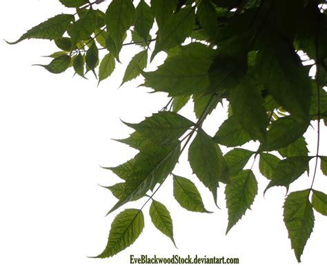 plant foliage foliage corner png by eveblackwoodstock on deviantart