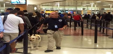 new york increase the security with heavily trained