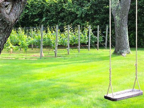 backyard grape vine backyard vineyards project video thumbnail favorite
