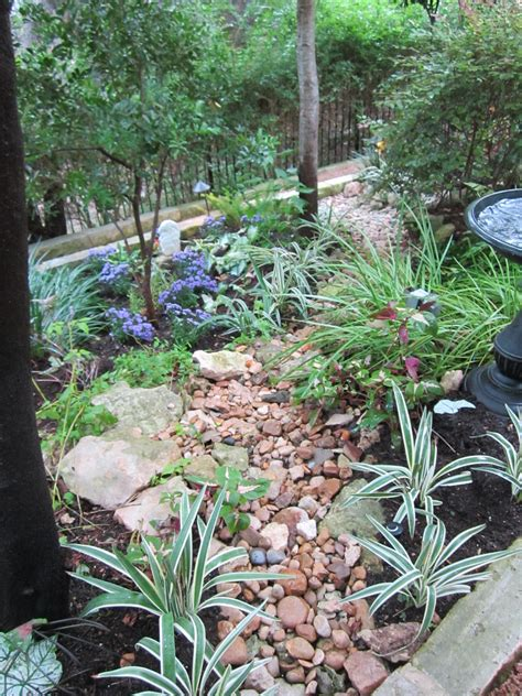 This Is A Shade Garden Where I Have Used Contrast And Rock Garden Plants For Shade