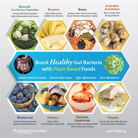 7 Tips To A Healthy Digestive System by Foods For Healthy Digestive System Food Ideas