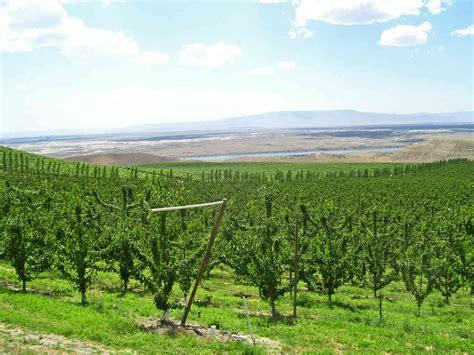 orchard washington about yakima valley orchards