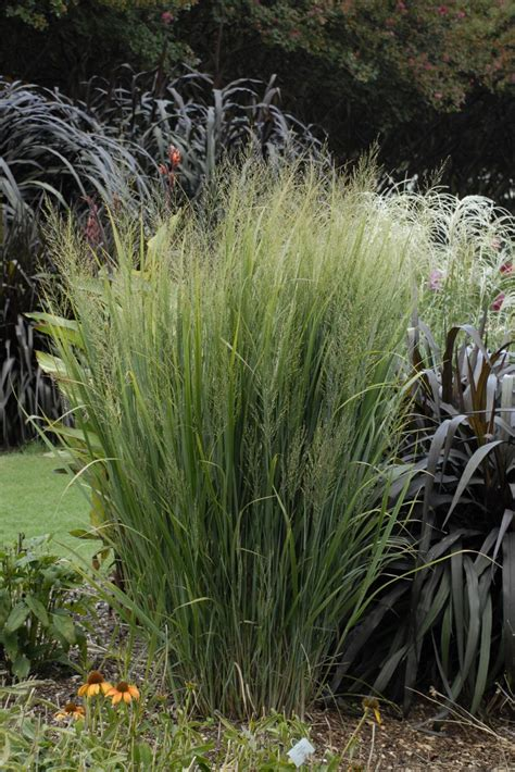 How To Decorate Your Home For Fall by 13 Terrific Tall Grasses Hgtv