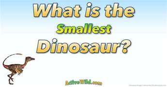 What Is The What Is The Smallest Dinosaur List Of Small Species With