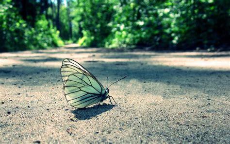 imagenes mariposas para facebook im 225 genes para portada