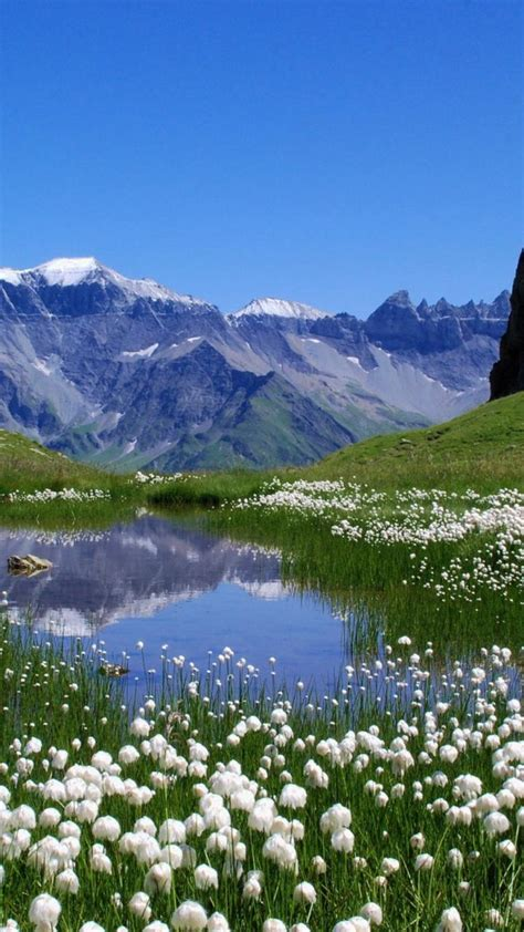 nature switzerland lakes alps meadows white flowers