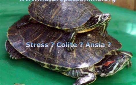 alimentazione per diverticoli intestinali colon irritabile colite stipsi dolori addominali