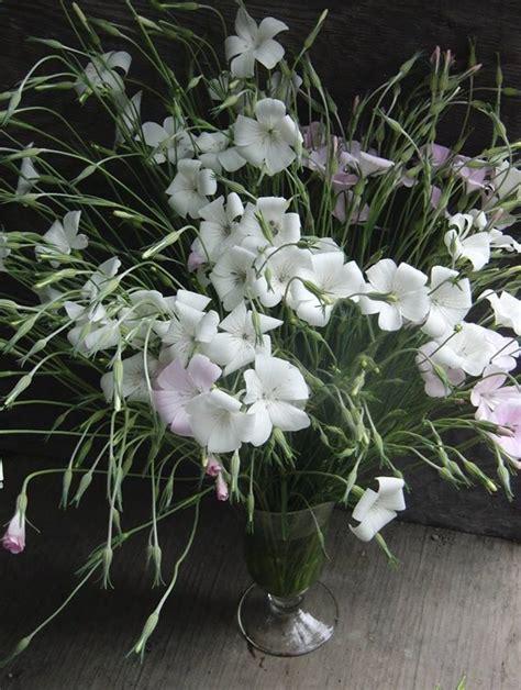 bathtub gardens agrostemma botanical brouhaha