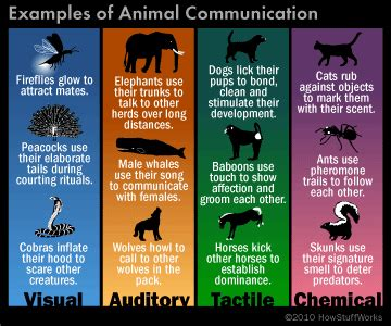 how do dogs communicate how do animals communicate howstuffworks