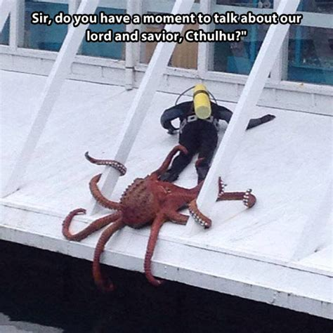 Octopus Meme - cthulhu followers the meta picture