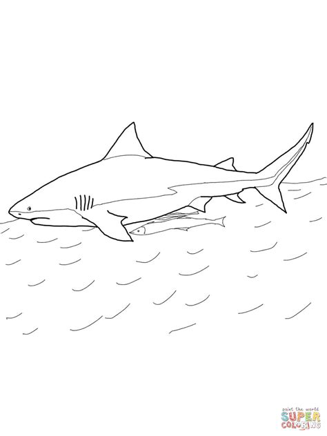 bull shark coloring page free printable coloring pages