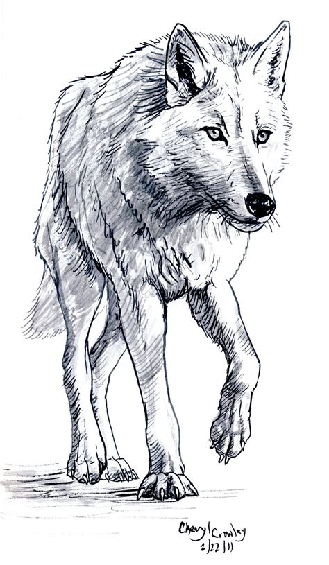 wolves drawings white wolf by silvercrossfox on deviantart