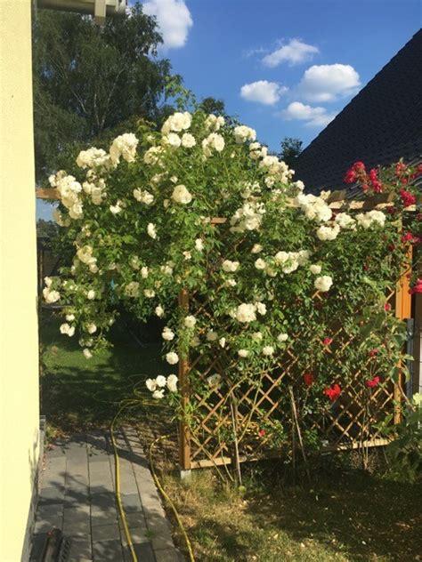 Rankgitter Als Sichtschutz by Gartengestaltung Mit F 252 R Beet Terrasse Rankgitter