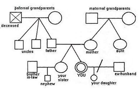 3 Generation Family Genogram To Start View This Sle Map Refer To It As You Read The Free Genogram