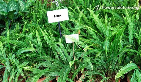 Show Plants For Garden Lalbagh Flower Show 2015 Pictures Gallery 6 Bangalore
