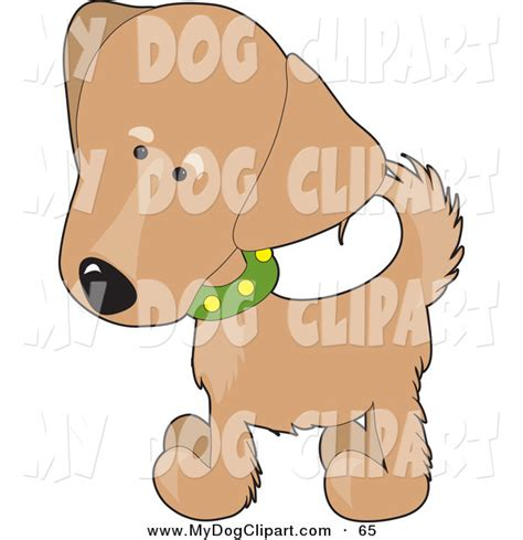 golden retriever puppy white spot on clip of a golden retriever puppy wearing a green collar with yellow spots