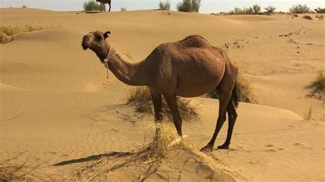 imagenes de animales del desierto animales del desierto los m 225 s inofensivos y los m 225 s
