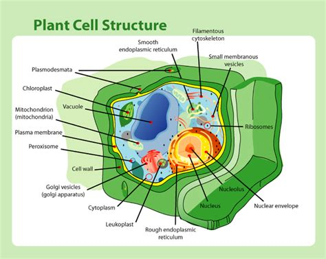 cell energy photosynthesis and respiration section 6 1 answers cells photosynthesis respiration mr rott s science room