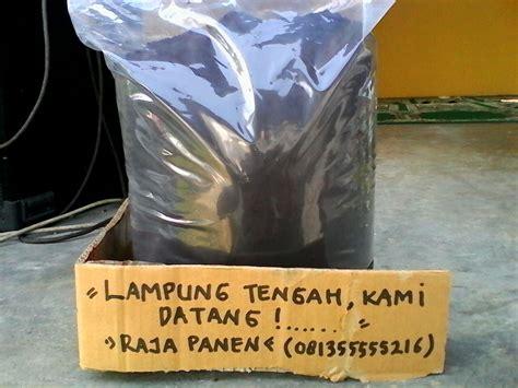 Jual Pupuk Hayati Cair distributor pupuk organik harga pupuk organik lung