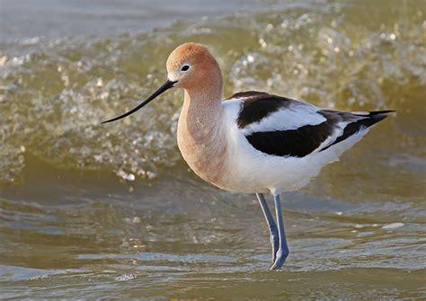 migratory bird treaty turns 100 north dakota game and fish