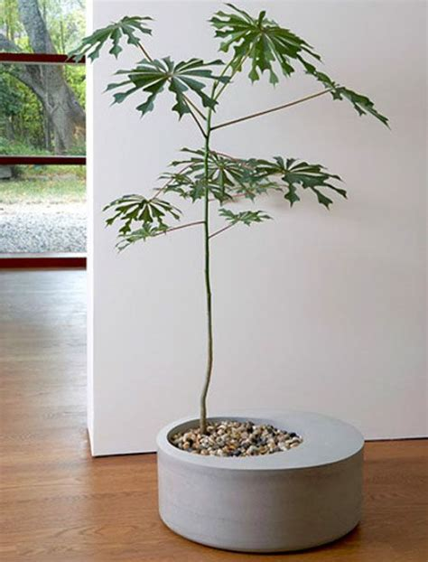 small indoor trees best 25 concrete planters ideas on pinterest
