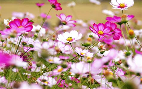 Decoration Home by Wild Flowers Hd Wallpapers