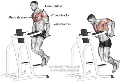 dips or bench press triceps dip exercise instructions and video weight