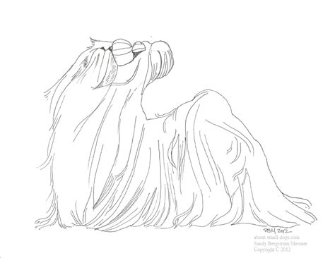 sketch dog shih tzu coloring pages