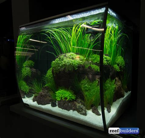 fluval flex tanks brings a new perspective to small