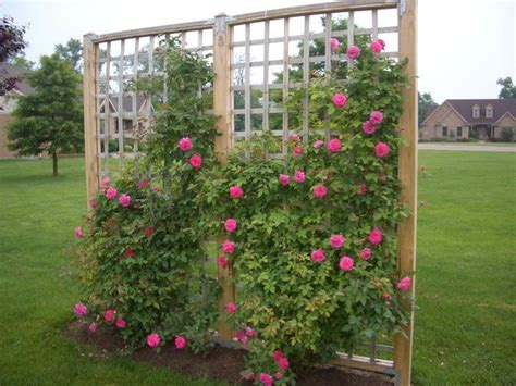 How To Build A Trellis For Roses 17 best images about trellis on do it yourself fence panels and garden trellis