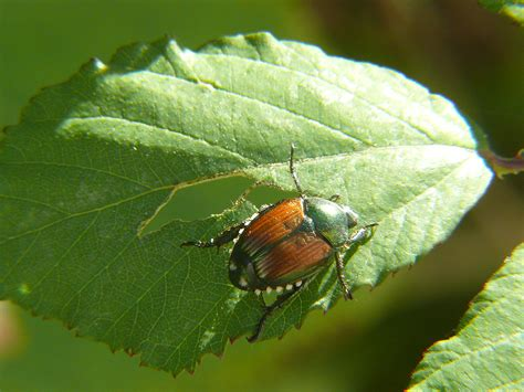 bug treer 2014 wisconsin insect review news from cooperative extension